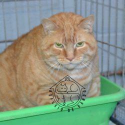 168-21 Garfield